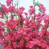 Cheap Natural Red Artificial Silk Flower Cherry Blossom