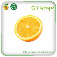 Fresh juicy oranges fruit