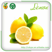 fresh citrus fruit exporter from China