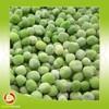 Wholesale fresh green peas frozen sweet green pea