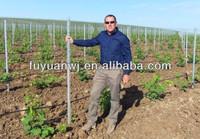 Vine Plants Vineyard Grape Stake Hot Dipped Galvanized Metal Vineyard Trellis Post