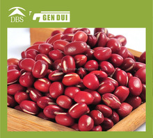 Small Red kidney beans square or round shape square or round shape