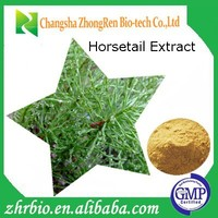 GMP Factory Provide Pure natural Horsetail Extract