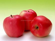 Apple extracteur de jus, Jus de pomme poudre usine