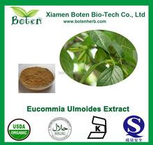 100% natural Eucommia ulmoides Oliv Leaf Powder