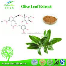 GMP Standard Manufacturer Supply Olive Leaf extract powder, 20%40% Oleuropein