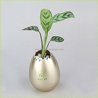 Magic planter wholesale flower pots for office,living room,bedroom,balcony