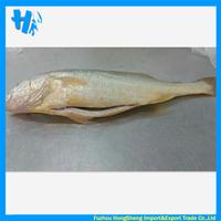 Yellow croaker fish farm