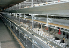 2015 hot sale poultry farm cage for broiler