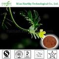 natural de tribulus terrestris extracto de la planta de china proveedor