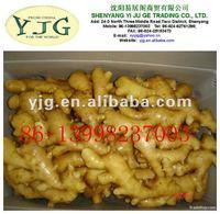 jamaican ginger, ginger plantation in Shandong, ginger fob price