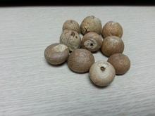 Vietnam Whole Betel Nut