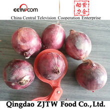 5-12cm different size fresh red onion