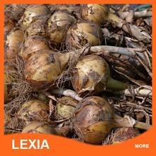 Onions in bulk