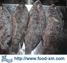 Factory price Xiamen tilapia light skinned/deep skinned