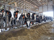 farm management system based on animal identification using RFID technology