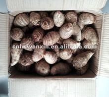 china fresh taro root