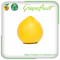 Fresh Fruit Sweets Grapefruits for Sale