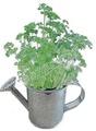 Regador de plantas, cozinha da planta, mini planta