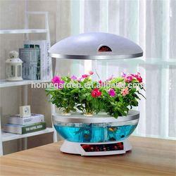 Strange new fish tank
