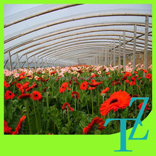 clear agricultural greenhouses uv protective plastic film