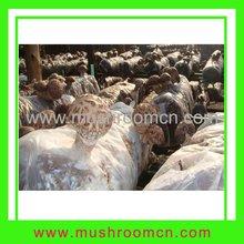 shiitake orgánicos micelios bolsa