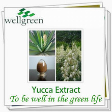 wellgreen wholesale yucca natural yucca extract powder