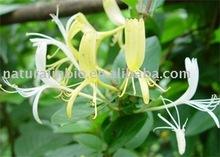 Honey Suckle Flower 90%chlorogenic acid(HPLC)