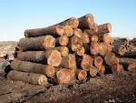 Walnut saw wood log