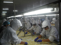 2015 new crop peeled garlic ,dehydrated garlic,garlic cloves from jinxiang country