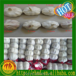 China pizhou white garlic for sale garlic mesh bag