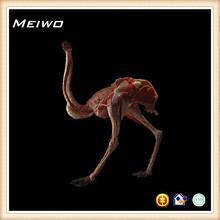 esqueletos de avestruz