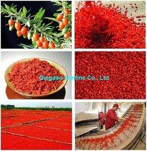 Ningxia Dried Goji Berry, dried wolfberry