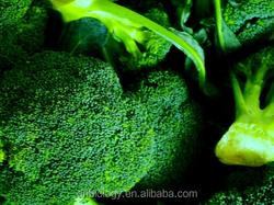 Broccoli Extract 0.6%-98% Sulforaphane sulforaphen or ratio extract/Natural Broccoli Extract