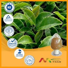 NSF-GMP Supplier provide health products 100% natural Green Tea Extract powder