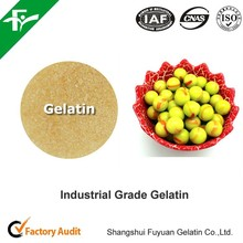 Beef Leather Gelatin/industrial gelatin/gelatin powder
