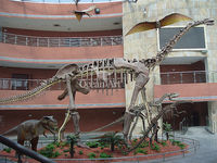 Large size(22m) dinosaur replica for playground