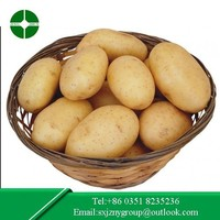 Large Quantity healthy potato from China