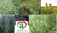 High Quality Natural Herbal Cytisine/Sparteine/Baptitoxine 98%
