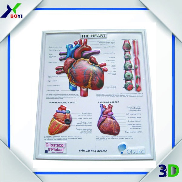 Cheap custom 3d embossed pvc poster printing medical for Print posters online cheap