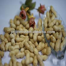 New Crop Raw Shelled Peanut/Peanut Kernels 2012