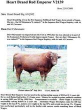 Red and Black Wagyu/Kobe Bull Semen- Prime Beef