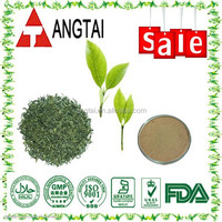 top quality and 100% natural green tea extract P.E. powder with tea polyphenols 98%