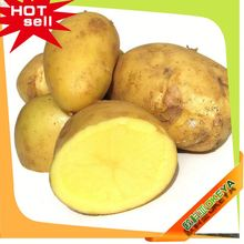 Okeya Plant Base dehydrated sweet potato