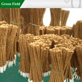 campo verde de apoio da planta coco pólo