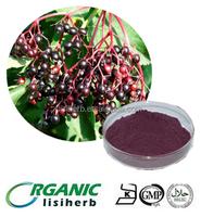 100% natural black elderberry fruit extract/Sambucus Nigra Berry powder