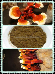 Traditional Chinese Herb Ganoderma Lucidum Extract Triterpenoids