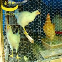 Galvanized Chicken wire mesh/Hexagonal wire netting( factory ISO9001 )