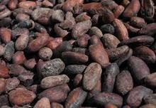 Pure Natural 10%-20% Theobromine Cocoa P.E.