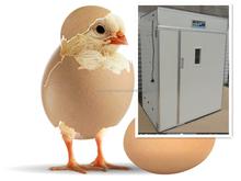 Chicken farm using brooder for chicks,brooder for chicks factory
